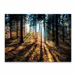 Obraz Styler Glasspik Autumn Sunset, 70 × 100 cm